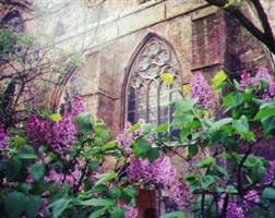 Of Lilacs and Springtime